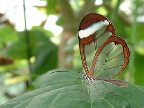 Transparent Butterfly - YouTube