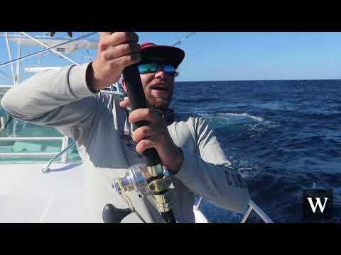 Western Waters - Cabo San Lucas - Wide Open Marlin Fishing