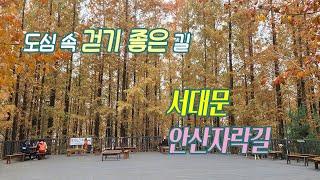 [서대문 안산자락길] 도심 속 걷기 좋은 길