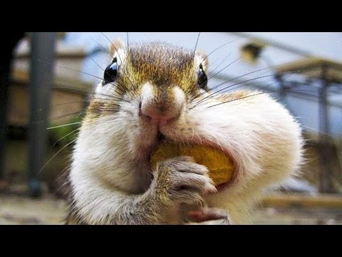 Best and funniest squirrel & chipmunk videos - Funny and cute animal compilation