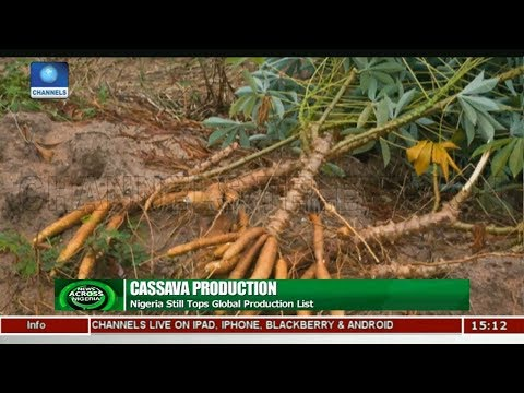 Experts Seek To Reverse Cassava Dwindling Revenues |News Across Nigeria|