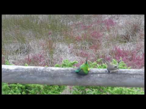 Birds 4 1