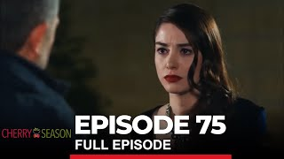 Cherry Season Episode 75
