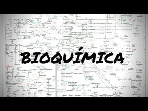 bioquímica- -matérias-da-faculdade-de-medicina
