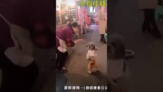 funniest dog