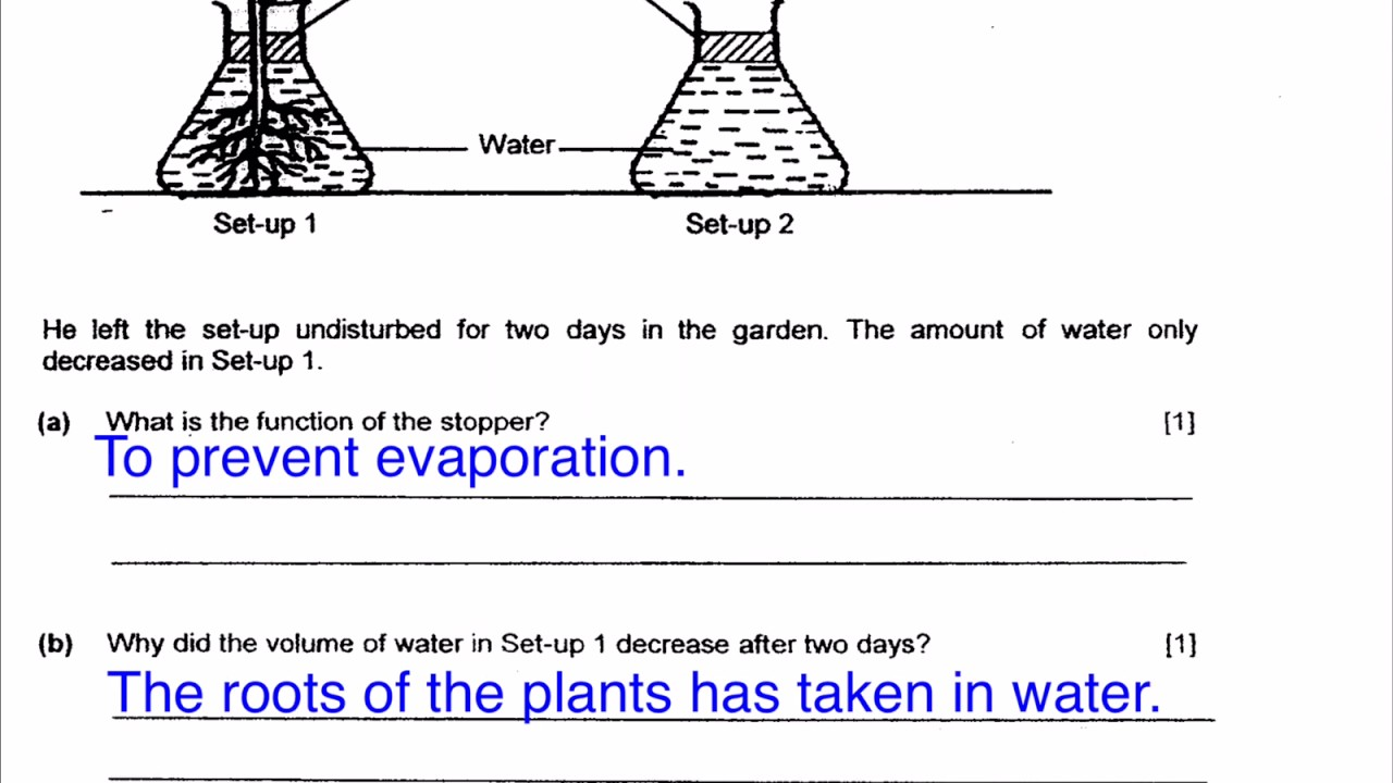 PSLE Science Structured Questions