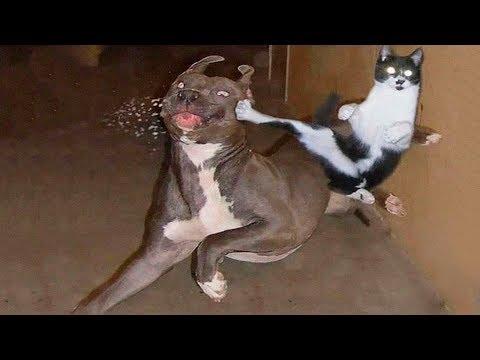 Funny Animal Fights Compilation – Animals Vs Animals – Funny Animal Videos