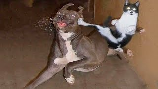 Funny Animal Fights Compilation - Animals Vs Animals - Funny Animal Videos