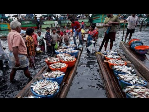 Fish Harbour Seafood Export