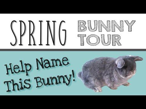 SPRING BUNNY TOUR + Help Name my Bunny!