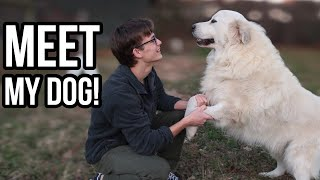 What It's Like Living With a Great Pyrenees