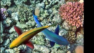 Mar Rosso Barriera corallina Shams Alam (Marsa Alam)