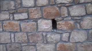 Технология кладки хорошо обработанного камня/The technology of masonry is well processed stone(, 2015-03-07T18:06:53.000Z)