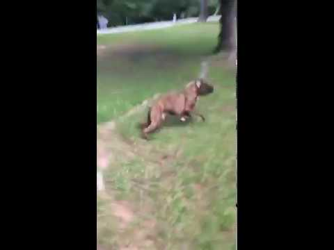 LOL: Dog Runs Into A Truck At FULL SPEED