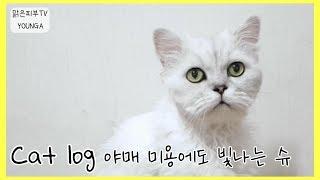 야매미용에도 빛나는 슈♡ 16살 페르시안 친칠라 고양이…