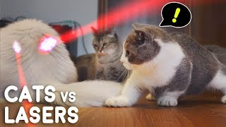 Cats vs Lasers Compilation