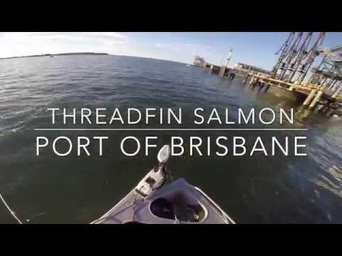 98cm Threadfin (King) Salmon Fishing The Brisbane River At The Port