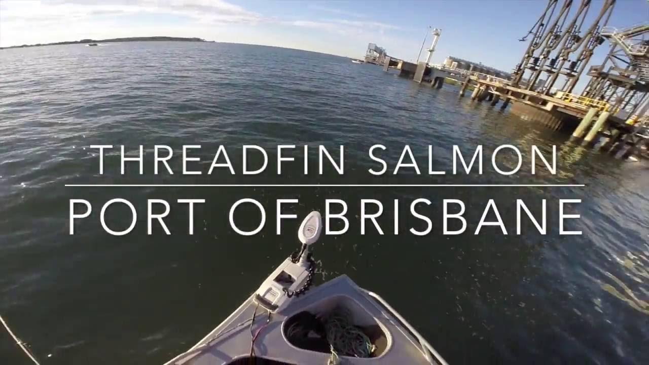 98cm Threadfin (King) Salmon Fishing the Brisbane River at ...