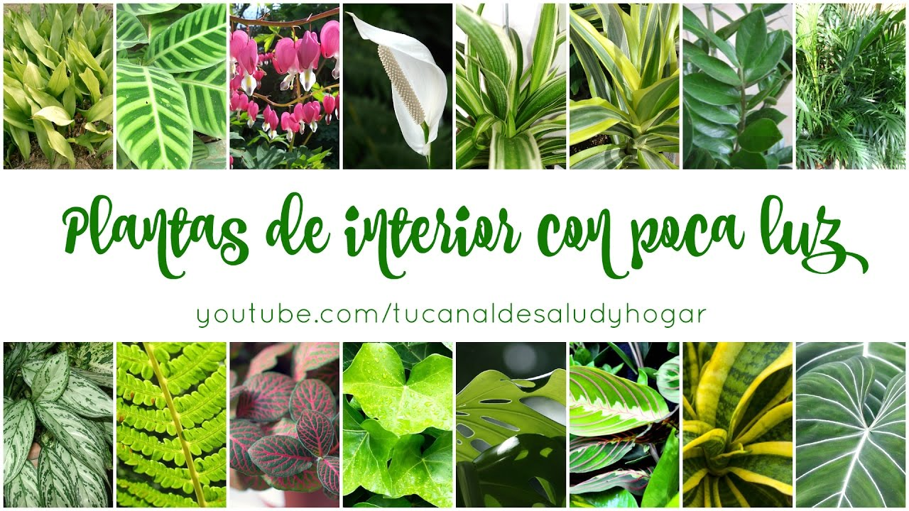 Plantas de interior con poca luz YouTube