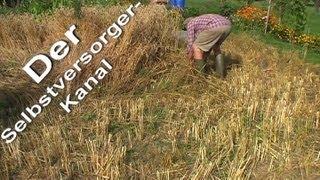 Getreideanbau fuer Selbstversorger die Ernte Teil 2