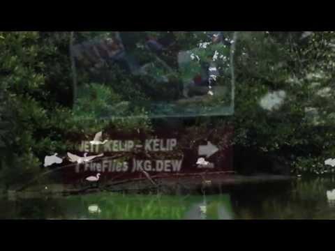 Firefly eco tourism in Kampung Dew, Perak, Malaysia
