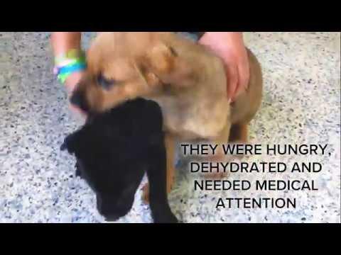Shepparton animal rescue