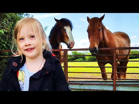 Making Friends With Horses On Ava Toy Show
