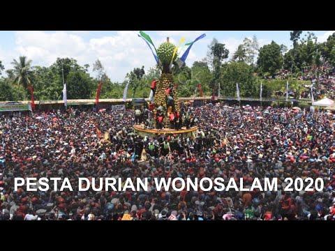 durian-gratis-jombang-|-kenduren-wonosalam-2020-|-pesta-durian-wonosalam-2020-|-kenduri-durian-2020