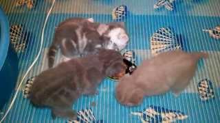 Как ухаживать и ЧЕМ КОРМИТЬ КОТЯТ ОТ 1 МЕСЯЦА (кормим котят)