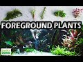 How to Grow Foreground Plants - Best Aquarium Foreground Plants