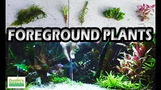 How to grow foreground plants: Foreground Focus