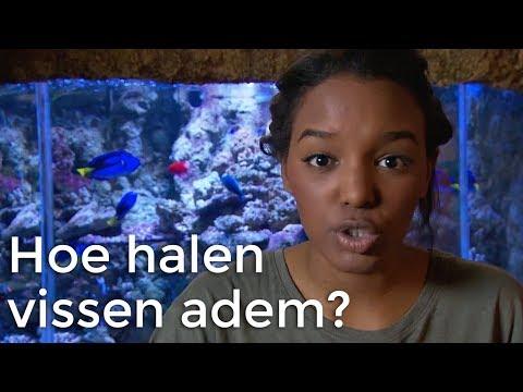 Hoe halen vissen adem? | Vragen van kinderen | Het Klokhuis