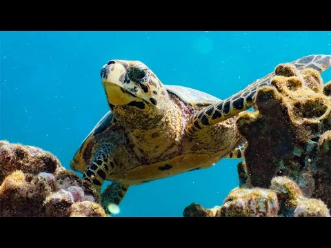 Bathala diving  Malediven 2017 long Version