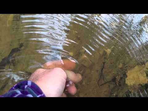 Shark Tooth Hunting Success in a Summerville SC Ditch