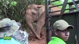 Successfully  Trans locating An Aggressive Elephant !