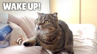 My Fluffy Cat Alarm Clocks   Kittisaurus