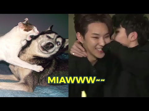 SEVENTEEN as Cats and Dogs