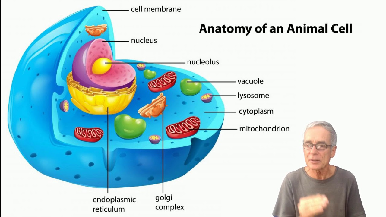 EMS how to boost your mitochondria health with sunlight and ...