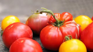 Why Homegrown Tomatoes Are SO MUCH BETTER