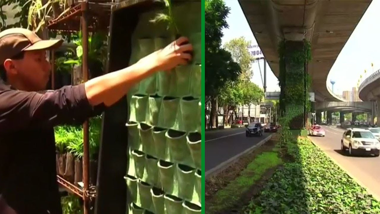 Mexico City Raises Green Awareness With Vertical Gardens   YouTube