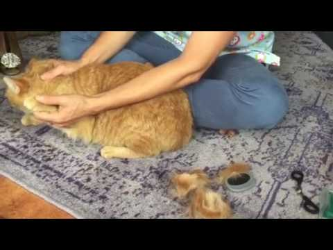 Healthy cat care from the vet. Daily- monthly-yearly care to maintain optimal health.