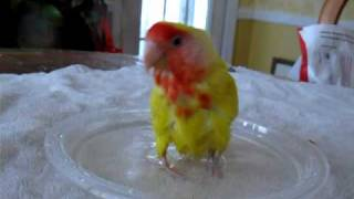 Cleo in Bath Time For Lovebird
