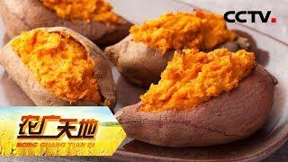 《农广天地》 20190722 赚薯钱 发窖财  CCTV农业