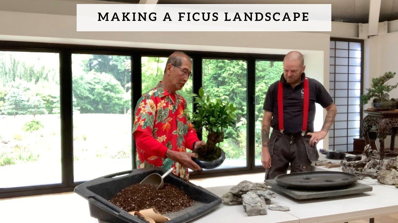 Making A Ficus Landscape