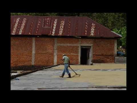 Tuli Interviews Eduardo Embrocio from Ambrocio Coffee Advisors, Guatemala City