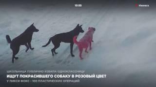 В Ижевске ищут покрасившего собаку в розовый цвет