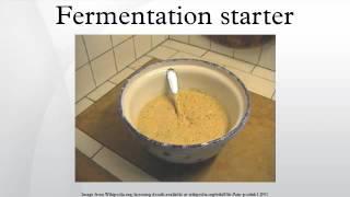 Fermentation starter