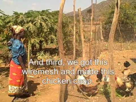 World Gifts: The gift of chickens