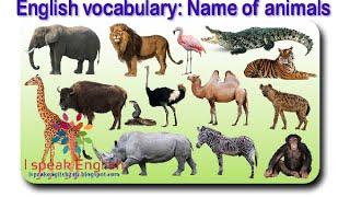 Học tiếng anh tên các con vật - Lesson 1 [HD720p]
