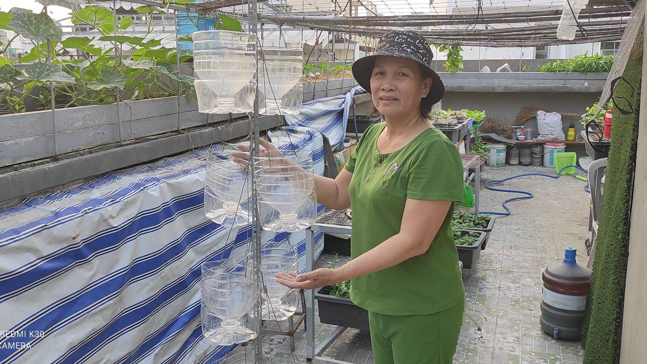 Gom Bình 5 lít làm trụ rau treo nhiều tầng cho sân thượng nhỏ   Khoa Hiên 394